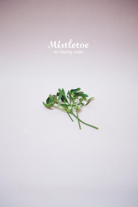5-marija-strajnic-mistletoe-for-kissing-under