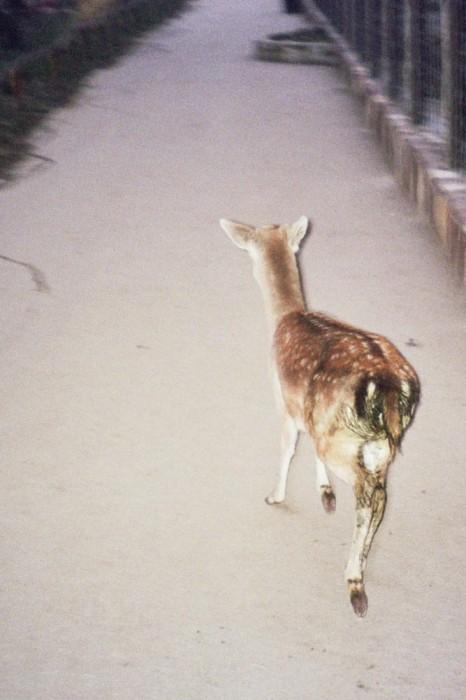 marija-strajnic-arienette-bambi