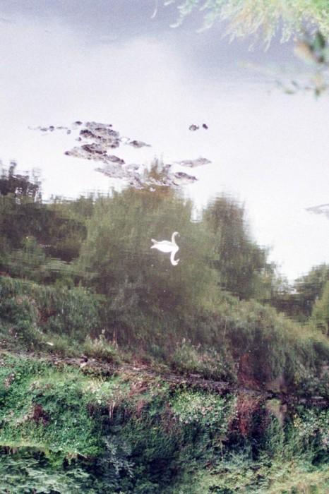 marija-strajnic-arienette-swan