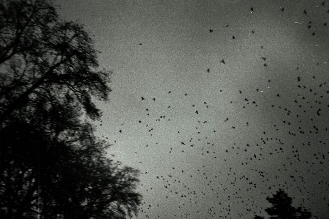 marija-strajnic-birds