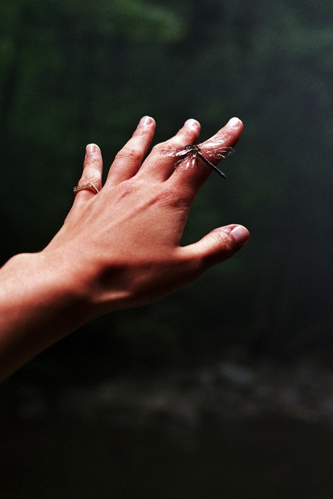 marija-strajnic-eerie-diptychs-dragonfly