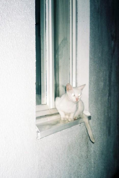 marija-strajnic-eerie-diptychs-white-cat