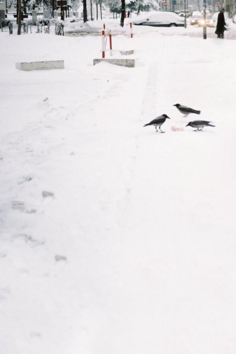 marija-strajnic-sophisticated-raven