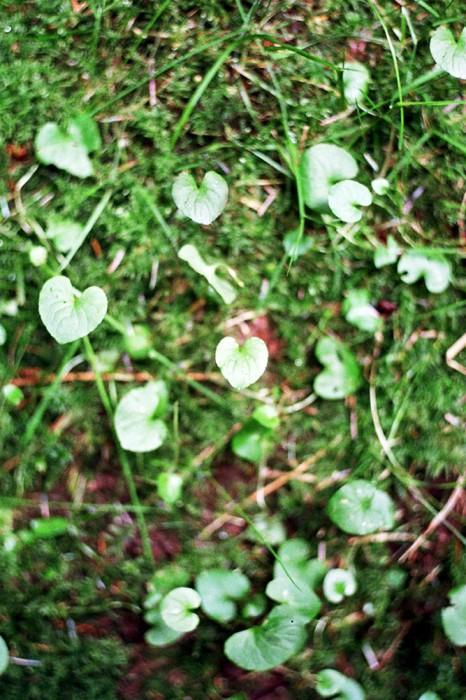 marija-strajnic-wildeflowers-8