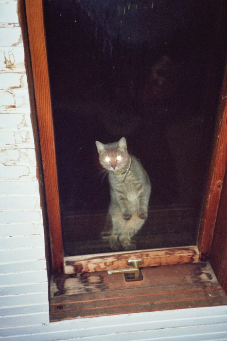 marija-strajnic-eerie-optimism-cat-window