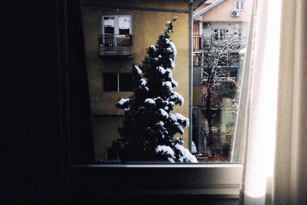 marija-strajnic-pinetree