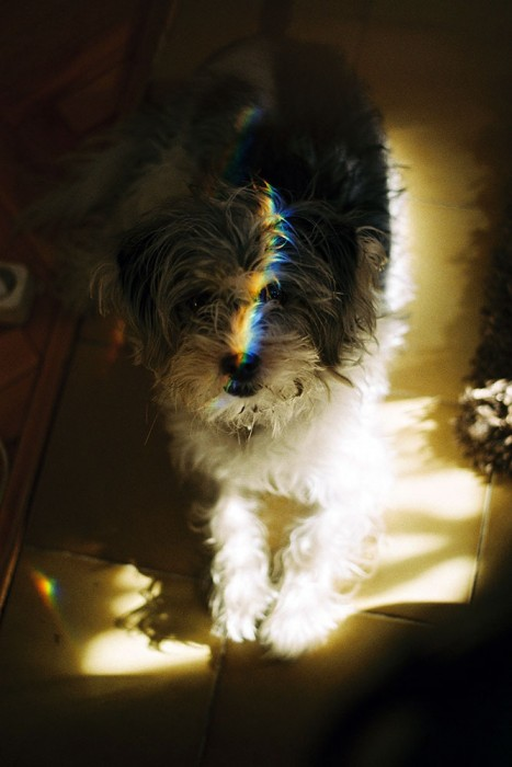 marija-strajnic-rainbow-dog