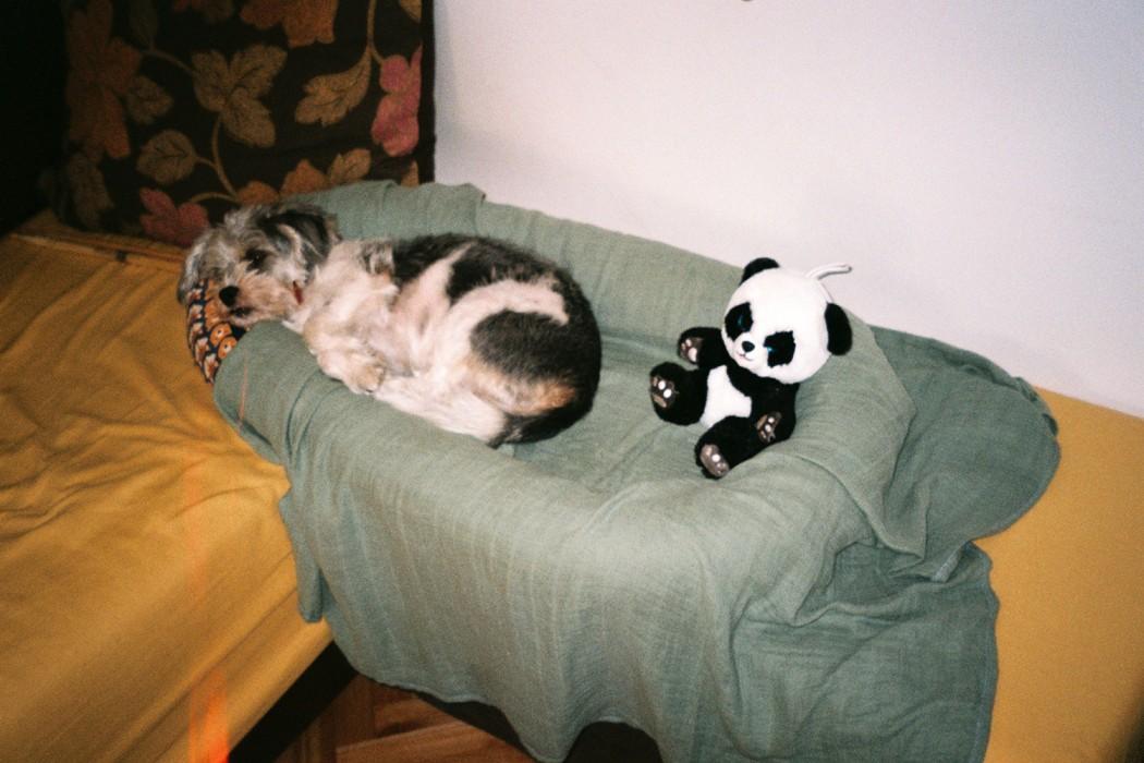 marija-strajnic-lili-panda
