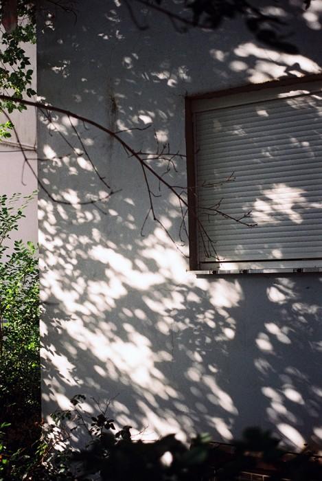 marija-strajnic-shadows